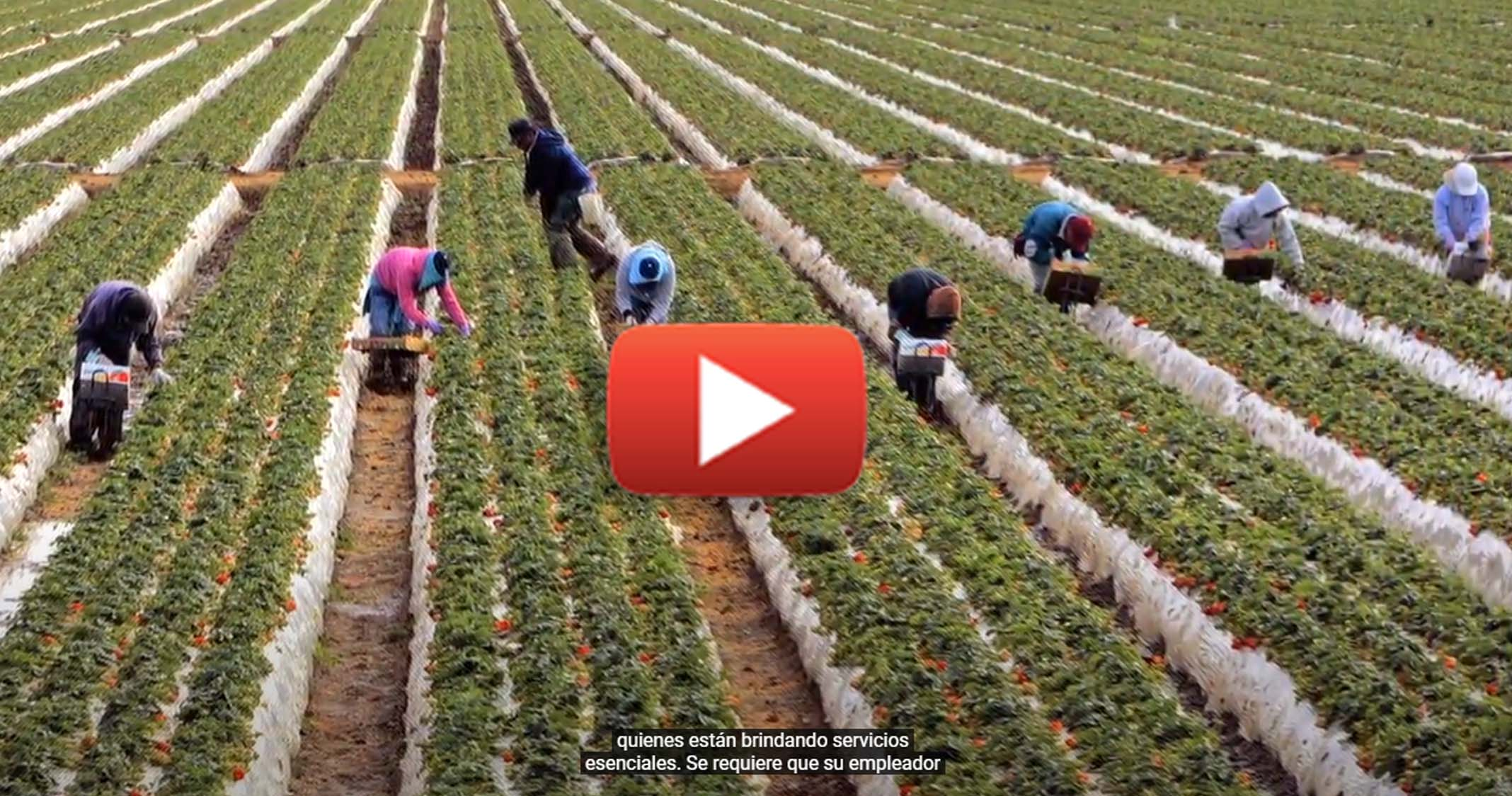 Youtube-farmworkers.jpg